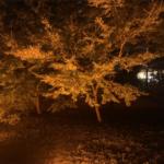 旧芝離宮恩賜庭園の紅葉ライトアップ 4日間のみの江戸秋夜祭に行きました – スタンプラリーも楽しいです