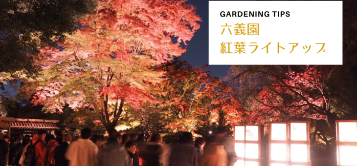 六義園のライトアップ – 紅葉がまるで幻想的!スタンプラリーもしました!