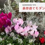 【ガーデニングのヒント】表参道を街歩き 小さいシクラメンなど花や植物がモダンで素敵!アニヴェルセル カフェやニコライバーグマンも!